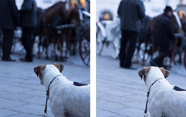 wien_fiaker hund