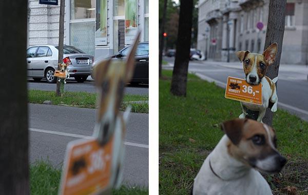 wien_gackisackerl hund