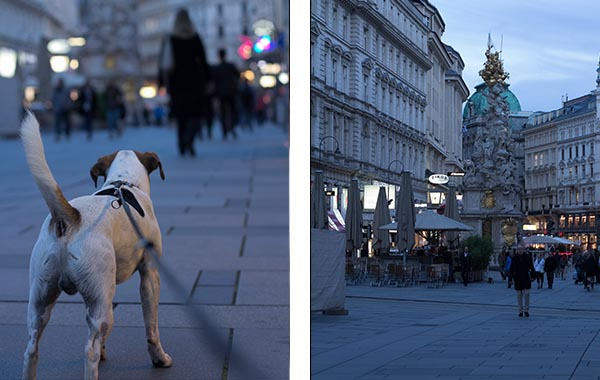 wien_innenstadt_1 hund