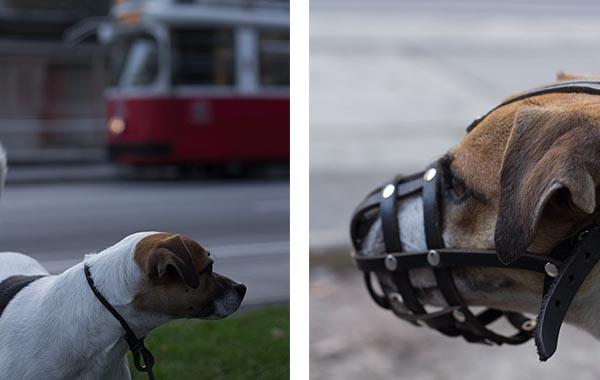 wien_strassenbahn wien hund