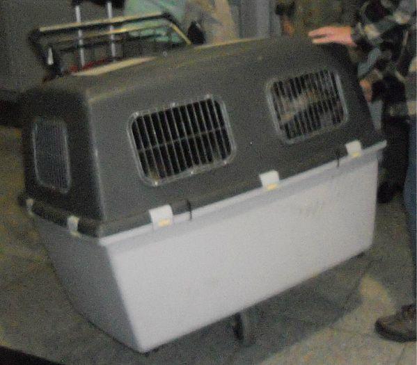 Hund Rex kommt in Deutschland im Käfig an