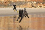 Hund sprintet am Strand entlang