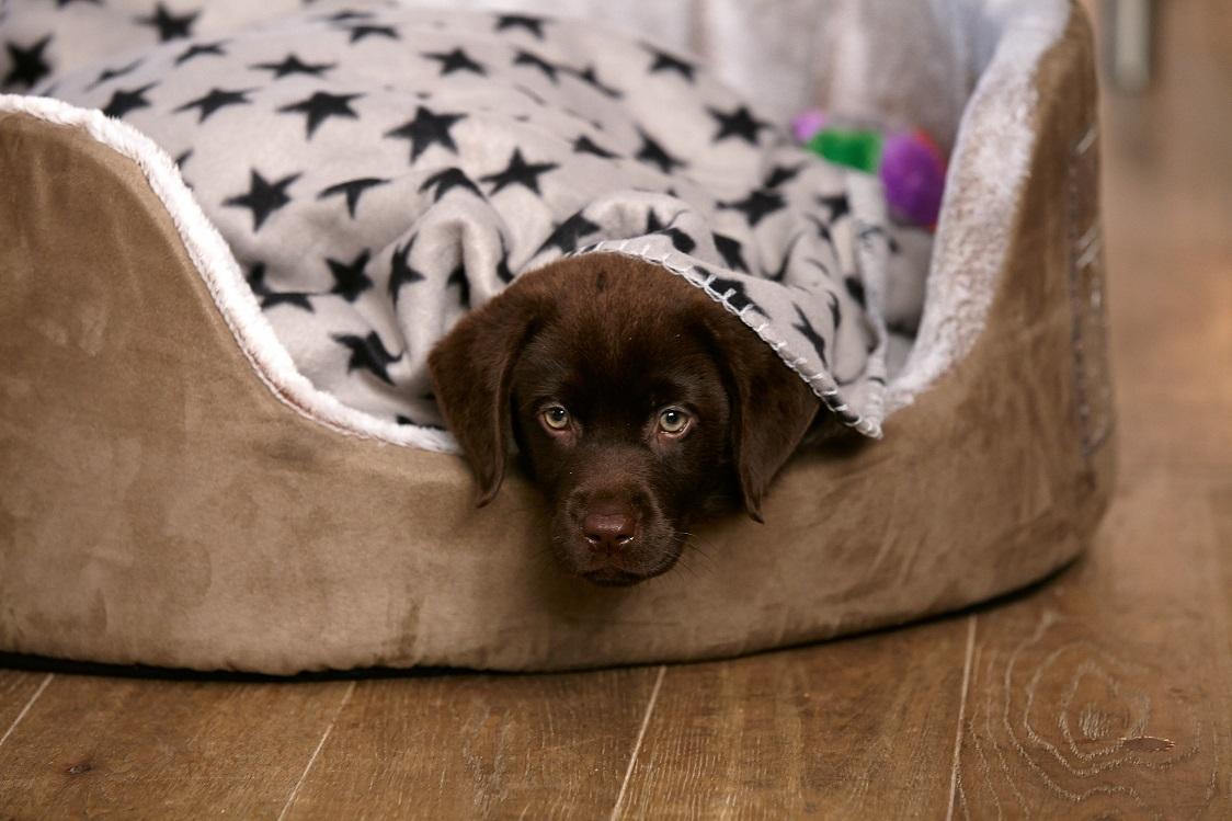 PRO PLAN Welpe im Hundebett