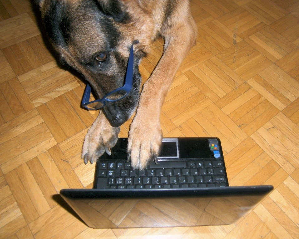 Hund Nico am Laptop
