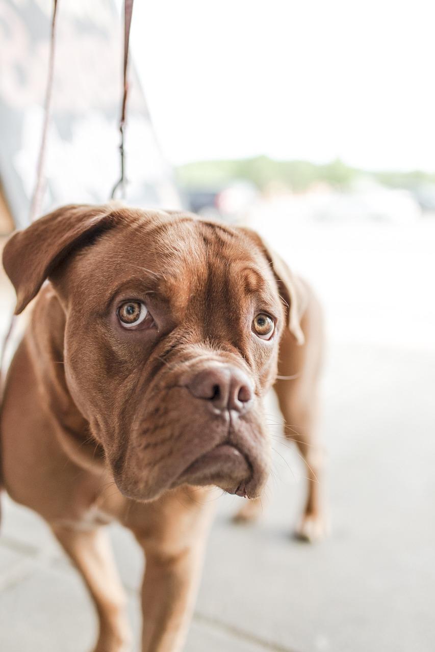Den Hund Sterilisieren Issn Rüde Hunde News Dogstyle