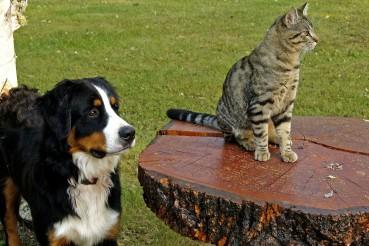 Hunde & Katzen, oder: Über die Anpassungsfähigkeit des Menschen
