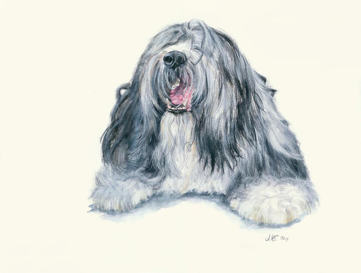Hunde Zeichnung Bearded Collie