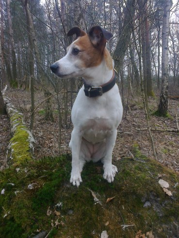 Wunschzettel eines Hundes – eine Weihnachtsgeschichte