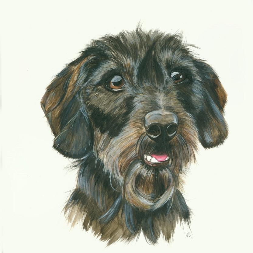 Hunde Zeichnung dackel