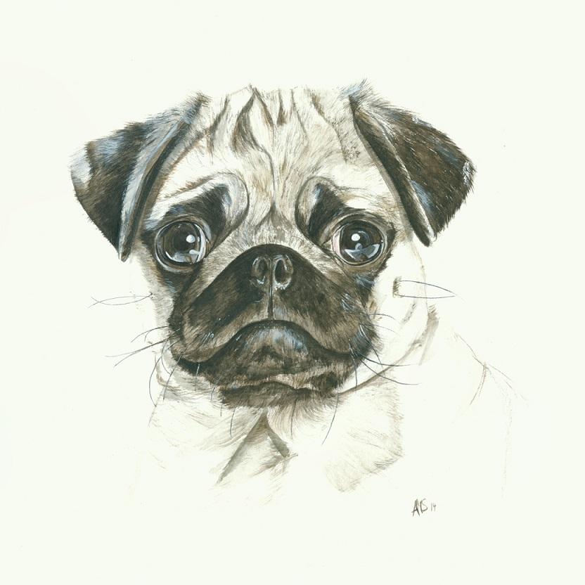 Hunde Zeichnung Mops