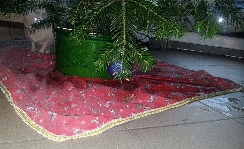 Weihnachtsbaum für Hündin peppi 3