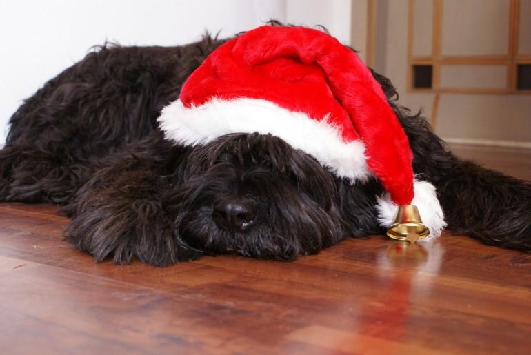 Weihnachten, das Fest der Liebe und der Hundeplätzchen