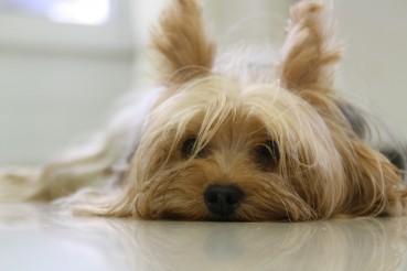 Der entspannte Hund im Alltag