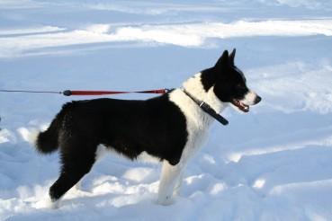 Gesund durch den Winter: der Sinn von Hundebekleidung