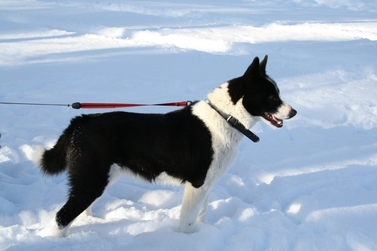 gesund durch den winter der sinn von hundebekleidung issn 39 r de hunde news dogstyle. Black Bedroom Furniture Sets. Home Design Ideas