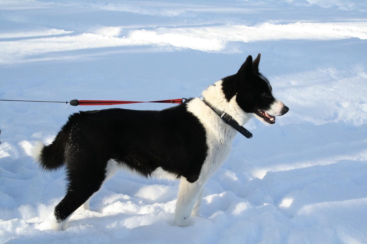 Hundebekleidung – Gesund durch den Winter
