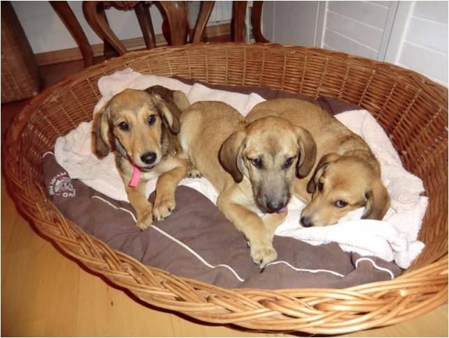 sch ne vorweihnachtszeit und gute taten issn 39 r de hunde news dogstyle. Black Bedroom Furniture Sets. Home Design Ideas