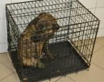 1 Hund Liam in der Käfigbox