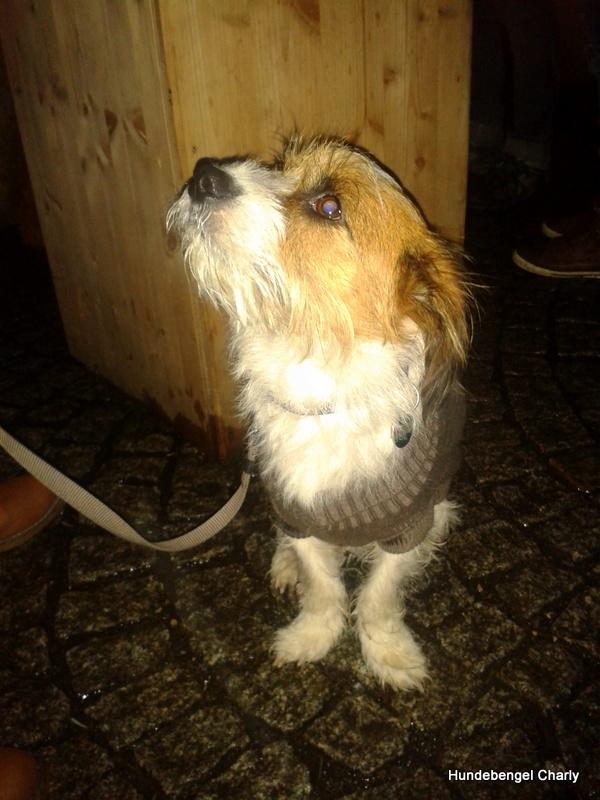 Hundebengel Charly
