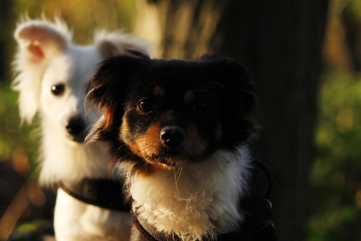 zwei süße Hunde im Portrait