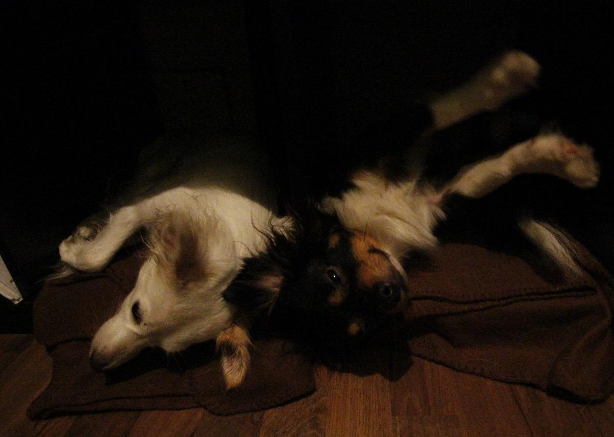 zwei Hunde lümmeln sich auf dem Sofa