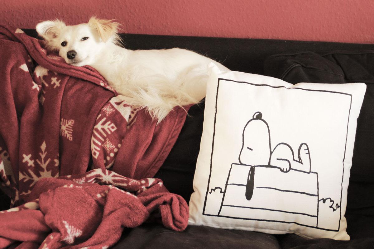 Hund mit Snoopy Kissen auf Couch