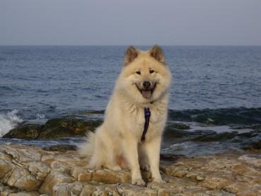 Hundegedicht: das reine Wesen