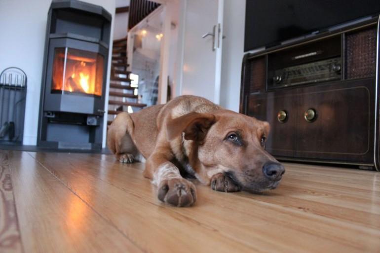 8 Lektionen, die Du von deinem Hund lernen kannst