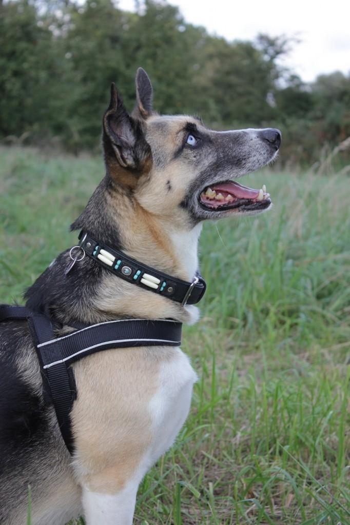 Tierschutzhund Telmo macht Sitz