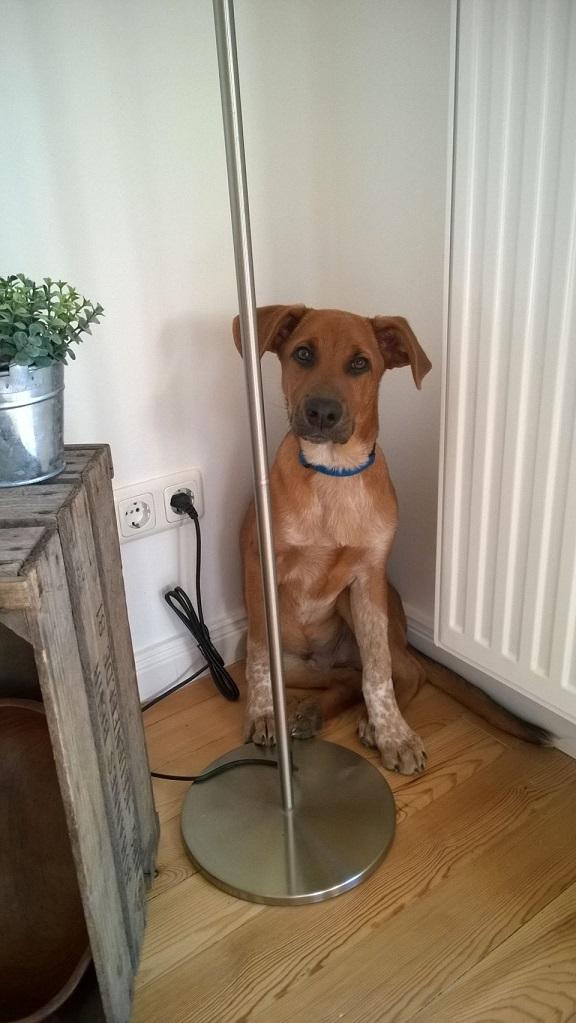 Hund Horton in der Ecke der Wohnung