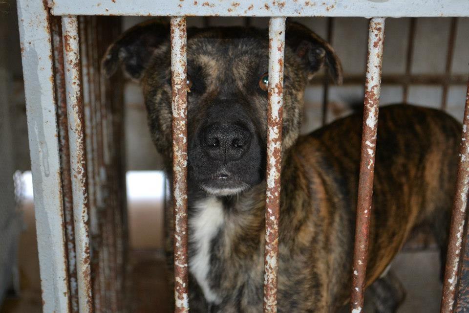 Tierschutzhund Liam im Käfig