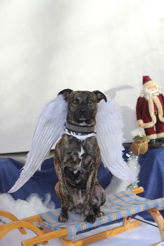 Hund mit Engelsflügeln