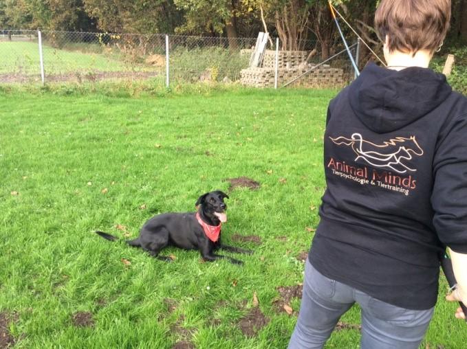 tierpsychologe - auf der Wiese mit Hund