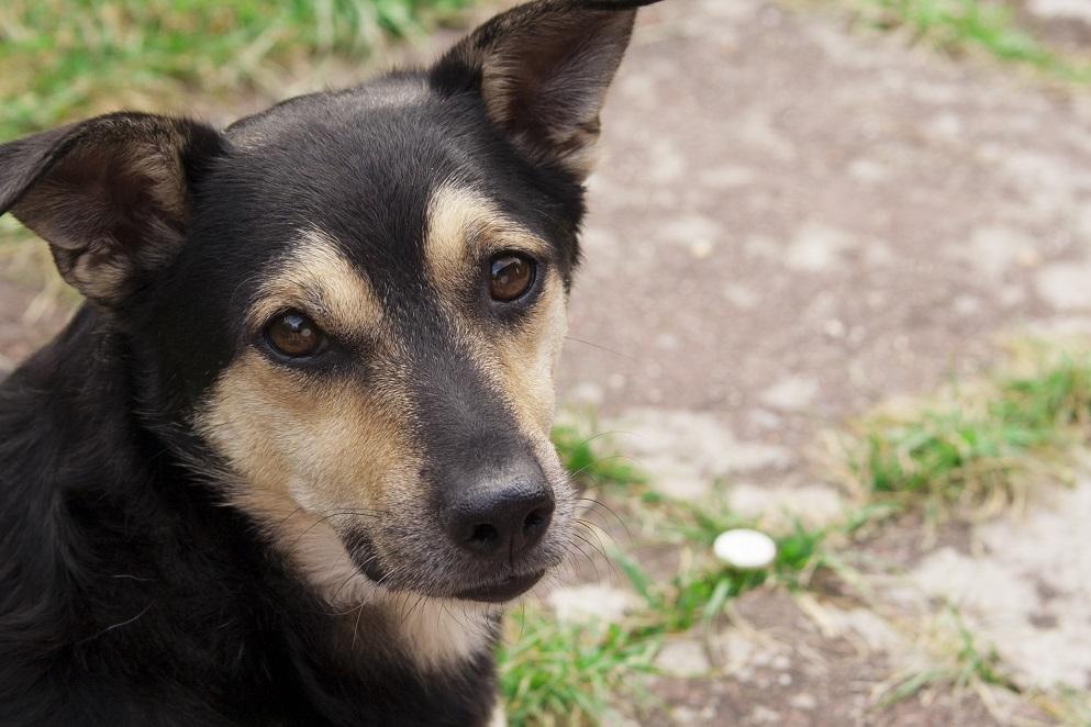 2012-Hund-Jack-05-c-Conny-Maisch_PETA-D