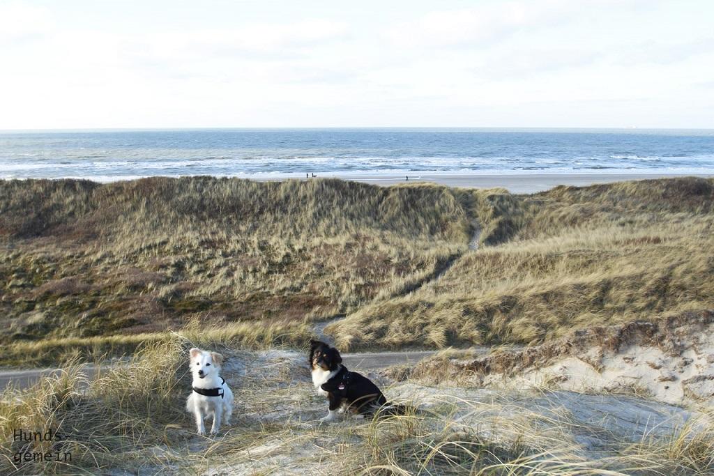 Kokoni Hunde am Strand
