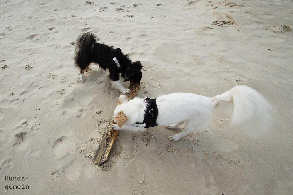 Hund Sparta mit Treibholz am Strand