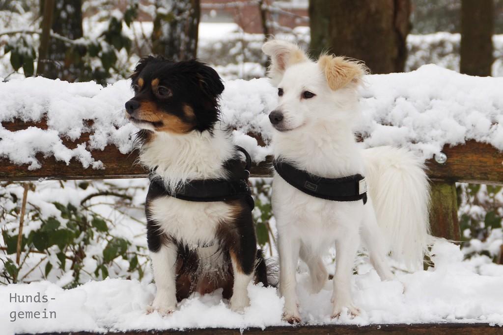 süße Hunde im Schnee