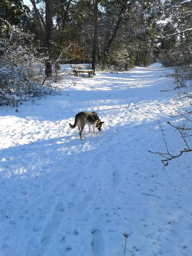 Telmo folgt einer verschneiten Spur