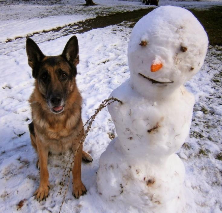 schäferhund nico mit schneemann