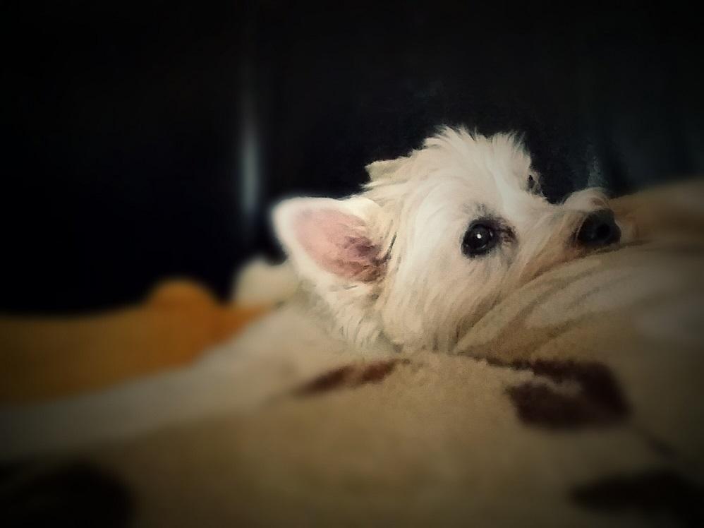 Hund Jessie