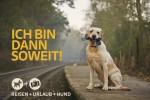 Hund wartet an Bahnhof