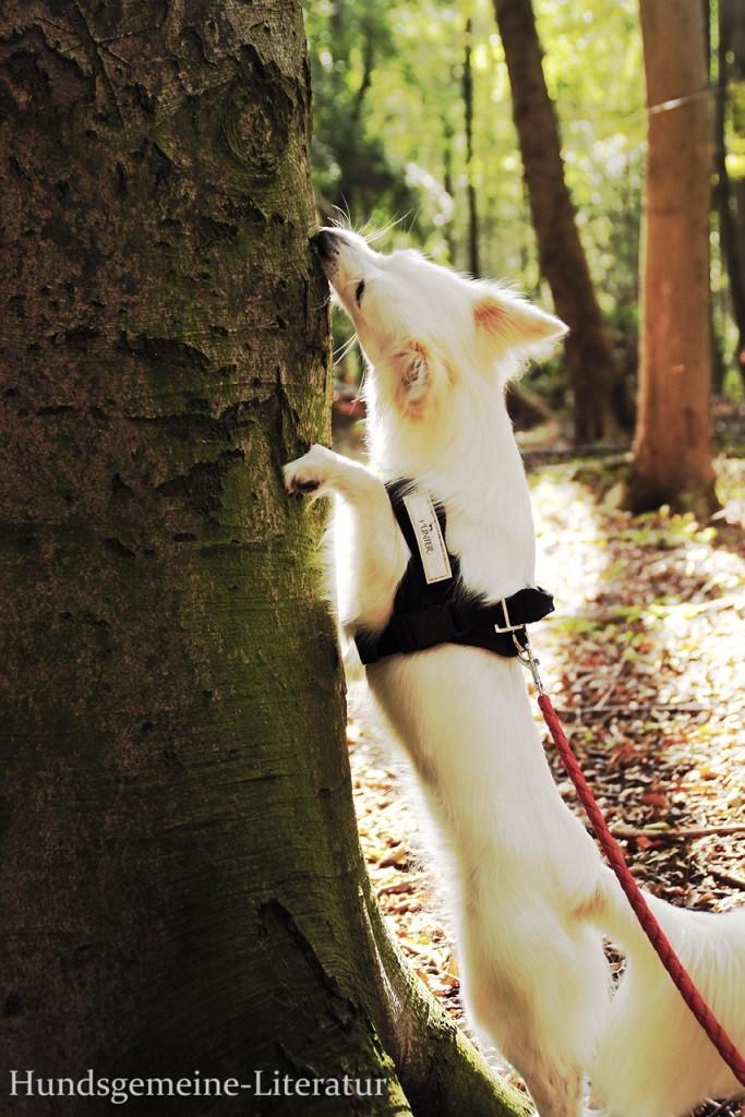 Hund am Baum