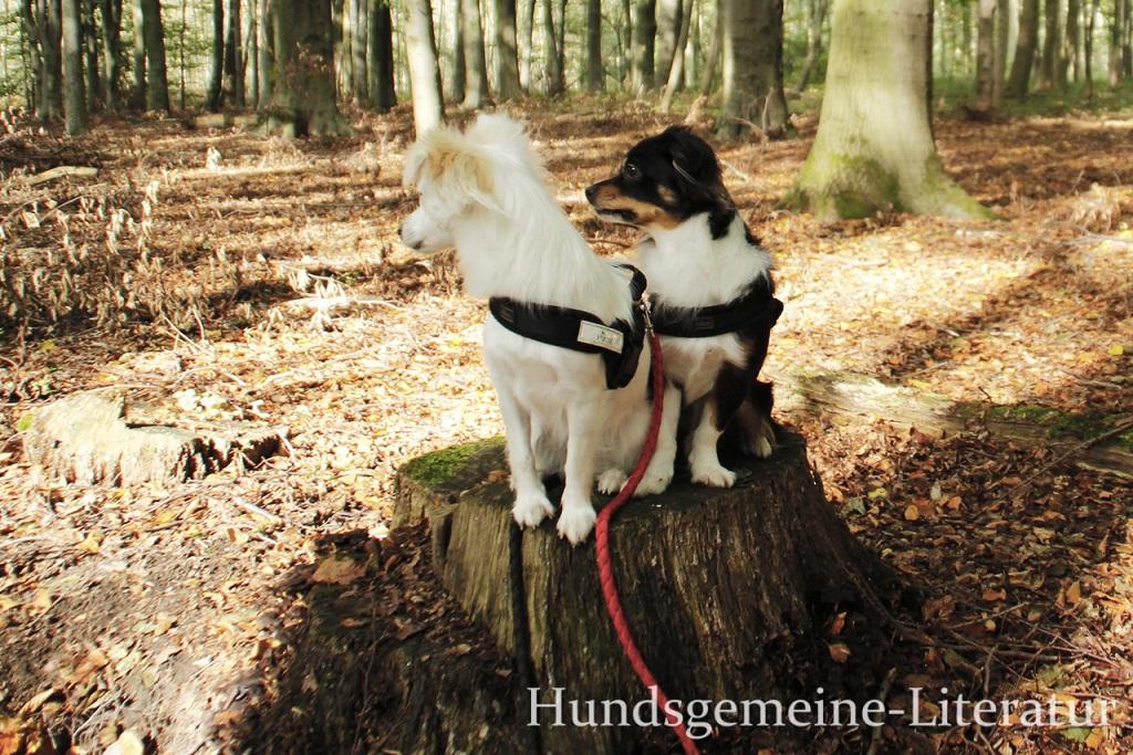 zwei Hunde auf Baumstamm