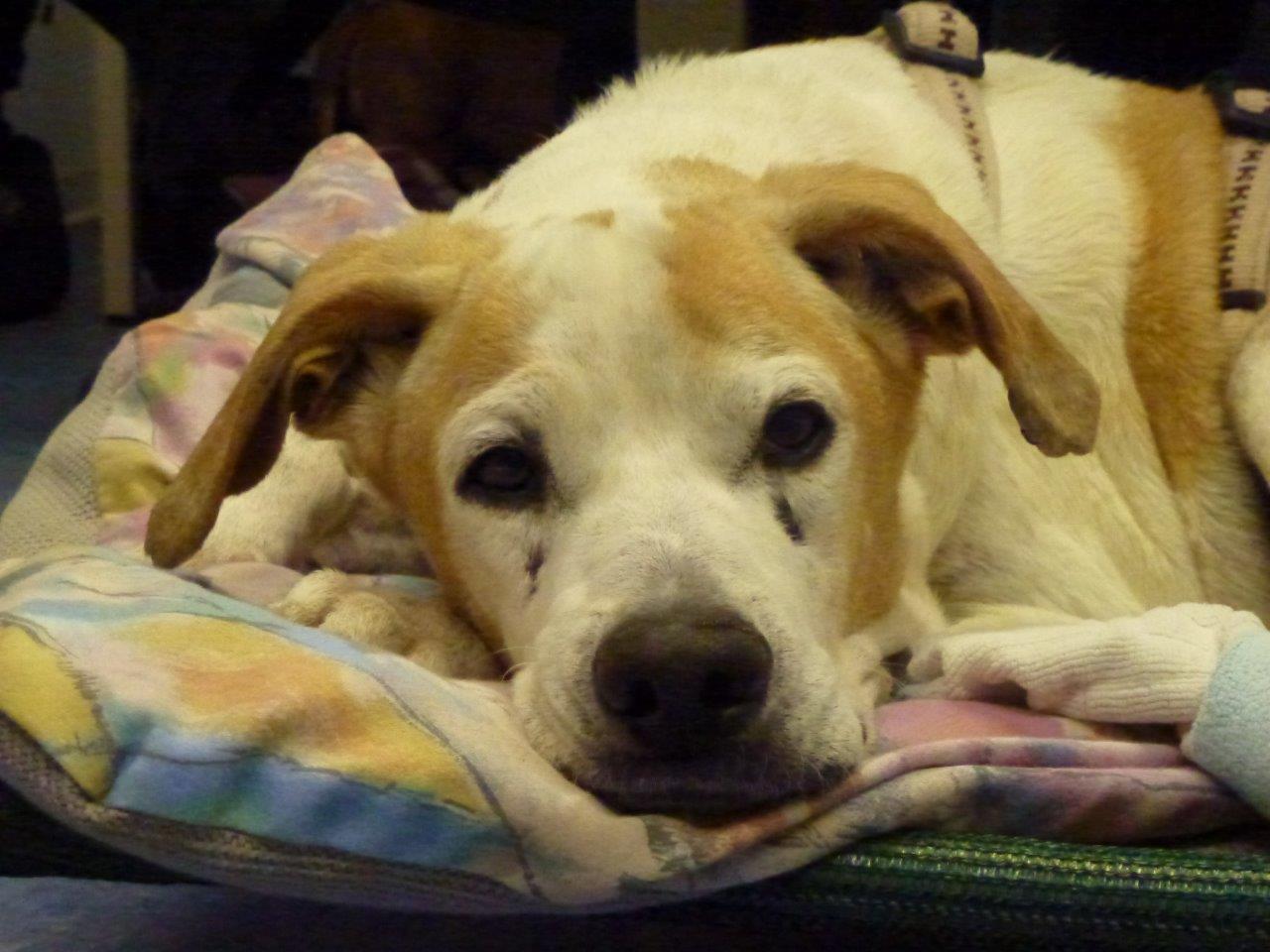 Hund Janosch bei PETA