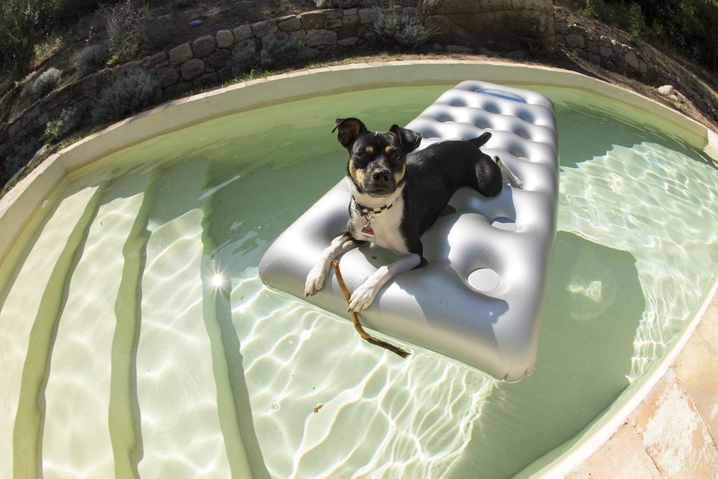 Hund auf Luftmatratze im Swimmingpool