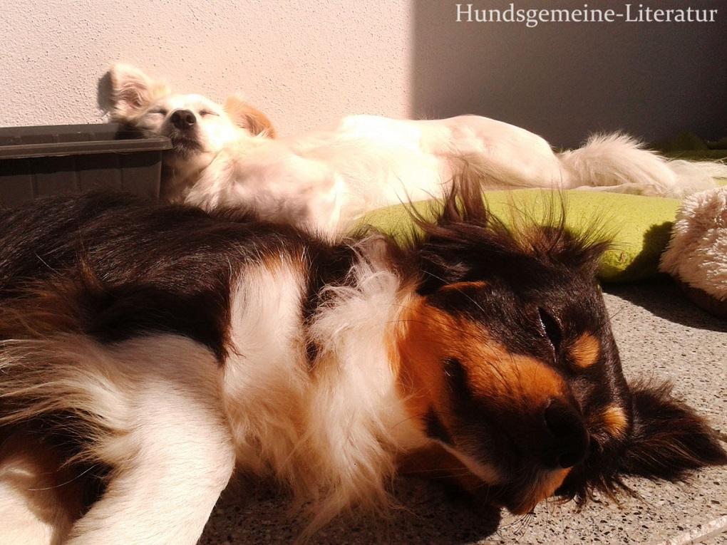 zwei Hunde schlafen nebeneinander