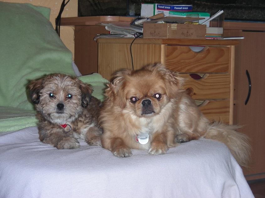 zwei Hunde auf dem Sofa