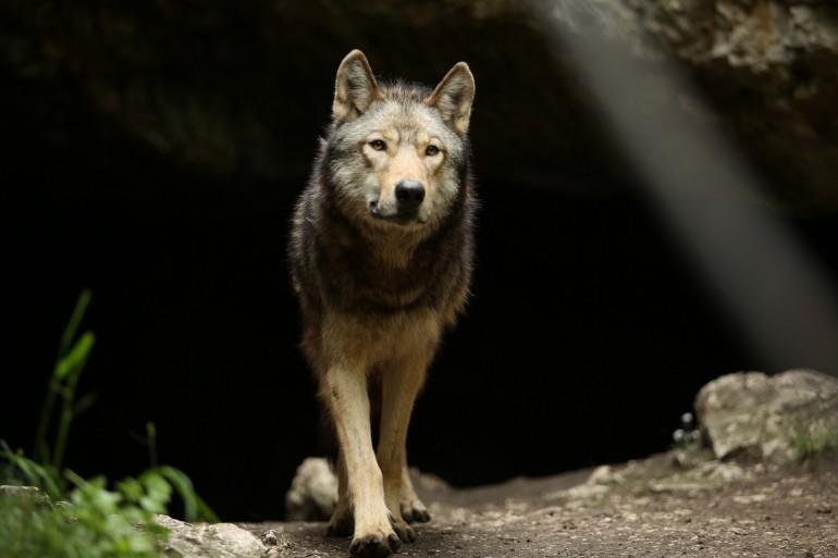 """Almo Nature präsentiert """"The Promise"""" – der große Treueschwur zwischen Mensch und Wolf"""