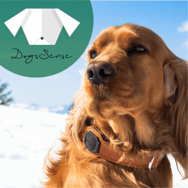 Techie trifft Hundeliebhaber – dogsSense