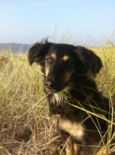 Schlagen, treten, anschreien – was tun, wenn man Gewalt gegen Hunde beobachtet?